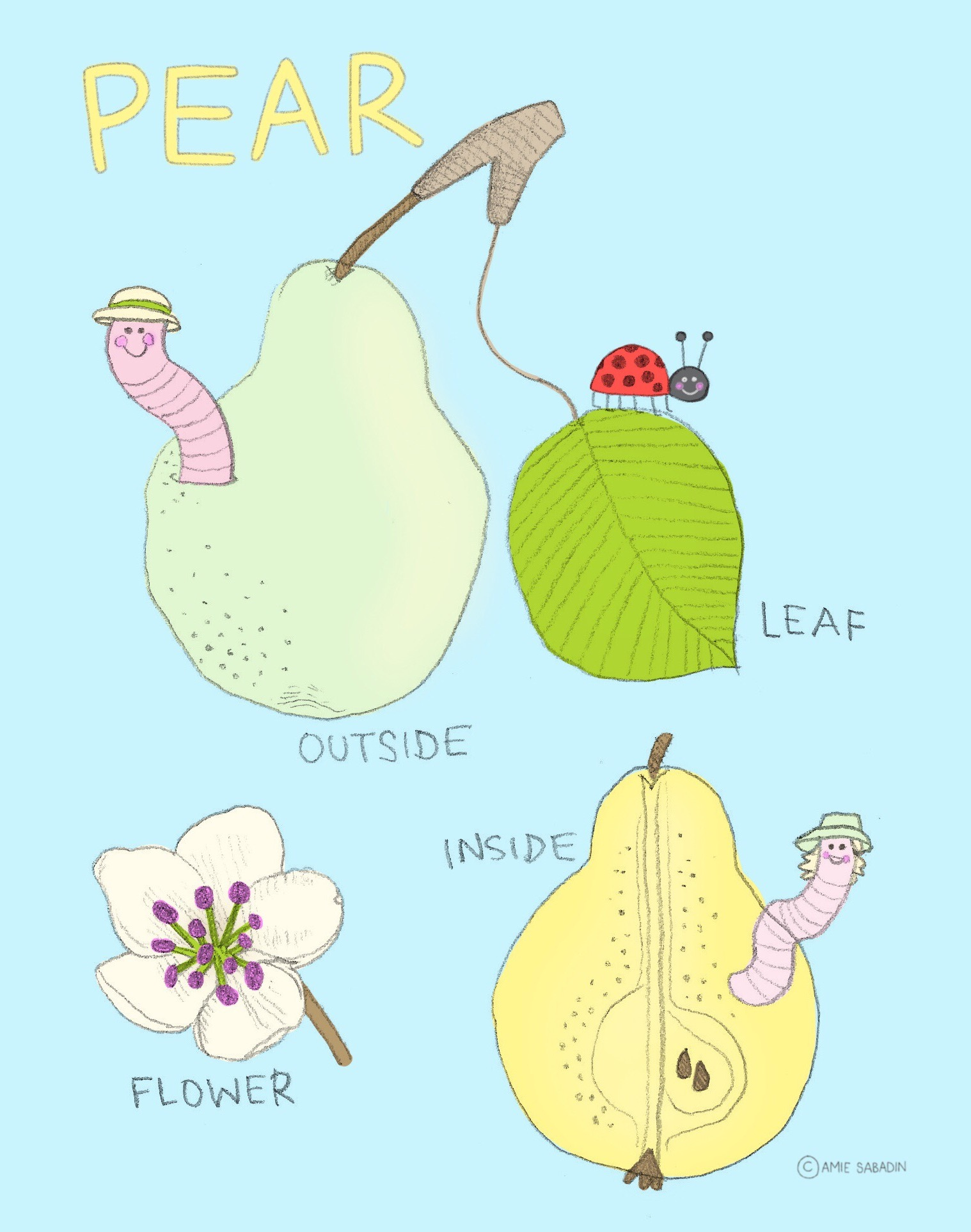 Botanical pear by Amie Sabadin